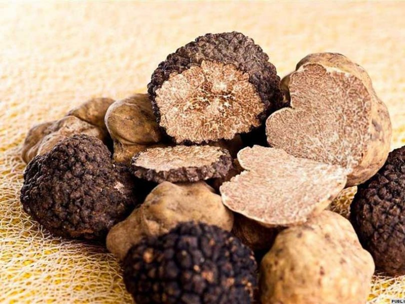 Istria Truffle & Wine Tour from Zagreb